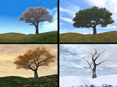 Four seasons cherry tree on a hill represents spring, summer, fall, winter poster