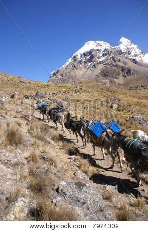 Mule Train, Carrying Loads