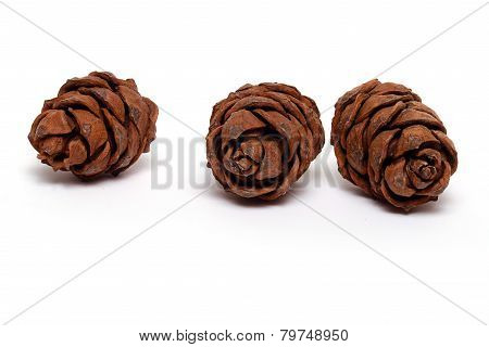 Three cedar cones