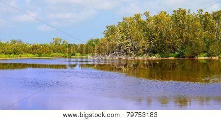 Everglades National Park Eco Pond