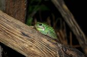 Small, moist, spotted frog resting on limb poster