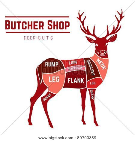 Deer meat cuts in color
