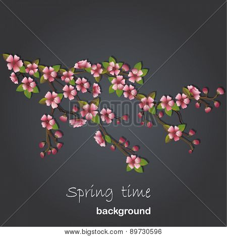 Cherry tree background