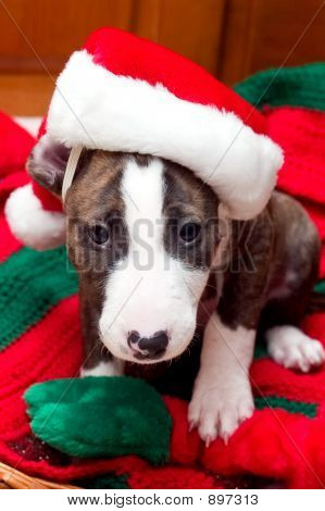 Sleepy Santa Dog