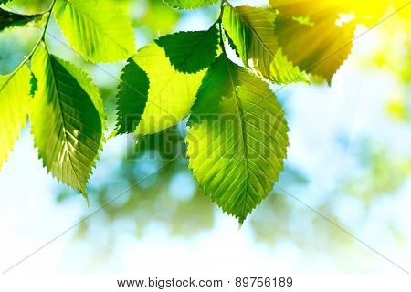 Nature green leaves background. Abstract blurred summer green lush bokeh. Defocused leaves with sunflare outdoor backdrop