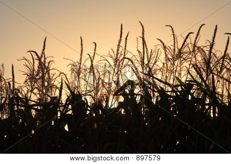 Autumn Harvest At Sunset