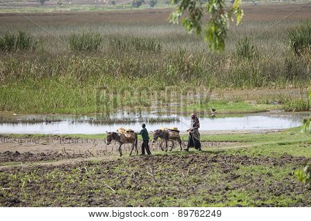 HARAR, ETHIOPIA-APRIL 21, 2015: Unidentified farmer and child use donkeys to move goods through lush farmland near Harar, Ethiopia