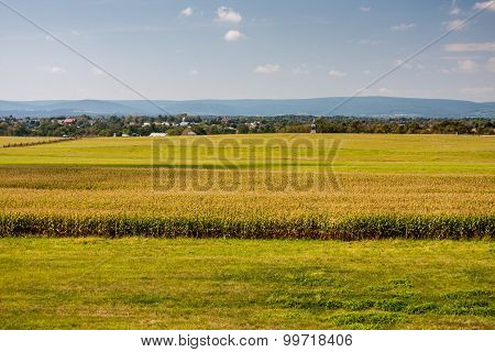 Bright Fields and Crops on a Sunny Day