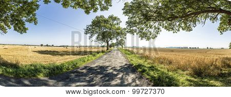 Alley With Old Oak Trees And Old Road In Usedom