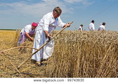 Farmer Is Cutting Wheat.