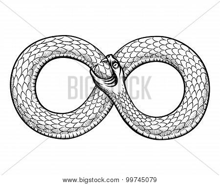 Snake curled in infinity ring. Ouroboros devouring its own tail