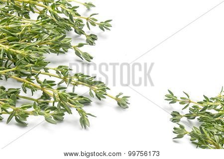 Fresh Green Thyme, Thymus Vulgaris, In Two Corners Isolated On A White Background