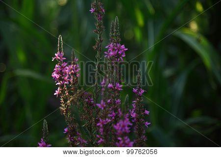 purple flower in front of blurred, green plants
