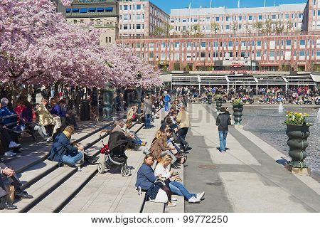 People enjoy lunchtime under blossoming cherry trees at Kungstradgarden in Stockholm, Sweden.