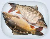 freshly carps on a plate. Common carp. Cyprinus carpio poster