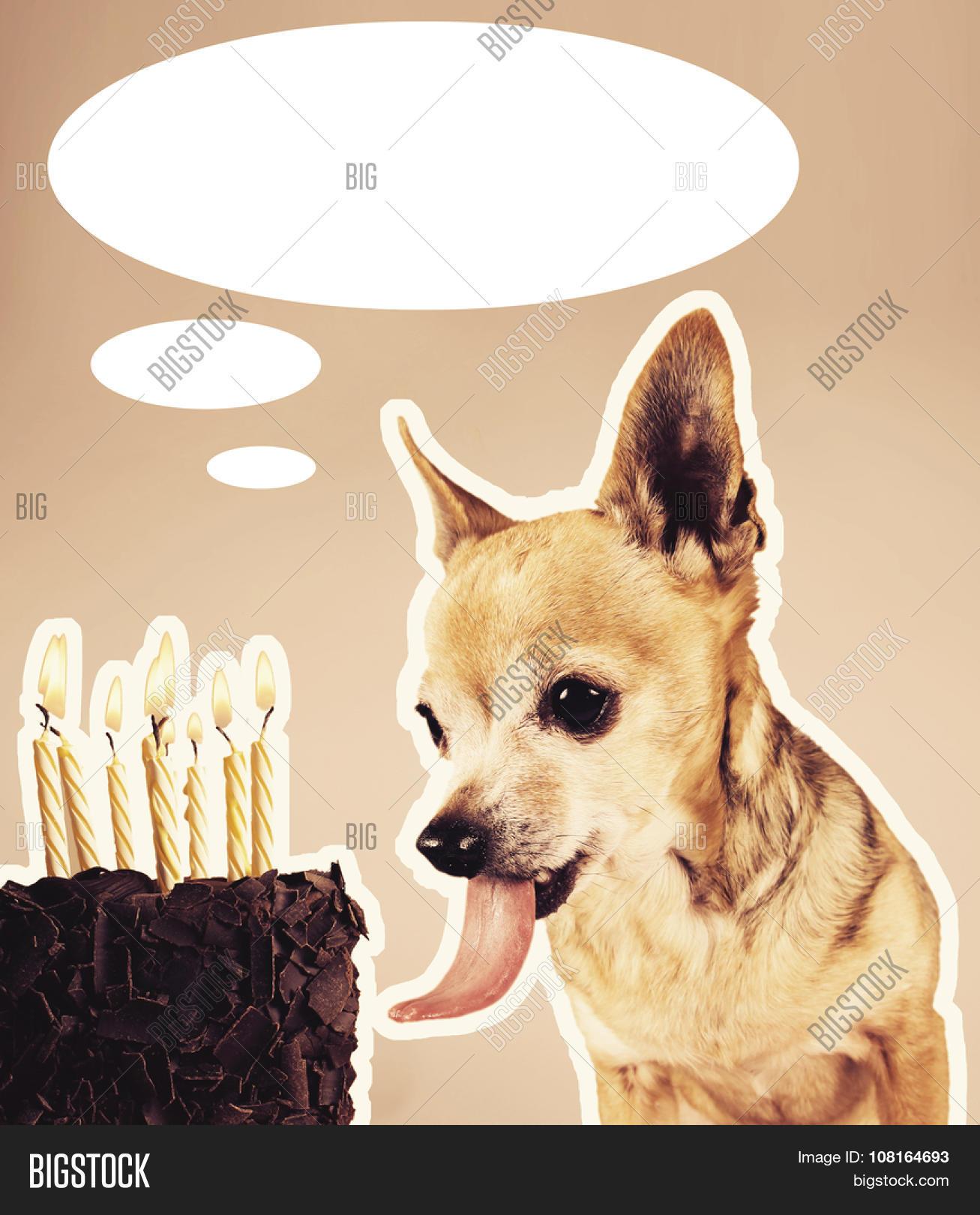 Phenomenal Chihuahua Licking Image Photo Free Trial Bigstock Funny Birthday Cards Online Unhofree Goldxyz