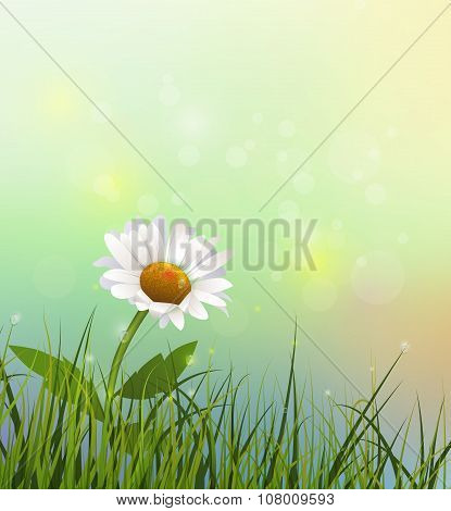 Vector Green Grass And White Gerbera- Daisy Flowers
