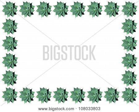 Haworthia limifolia spiral shaped succulent plant border and frame isolated on white. poster