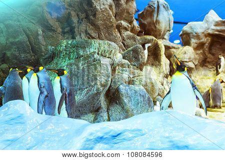 Penguins On The Artificial Glacier In Loro Park (loro Parque), Tenerife