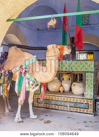 The Working Camel