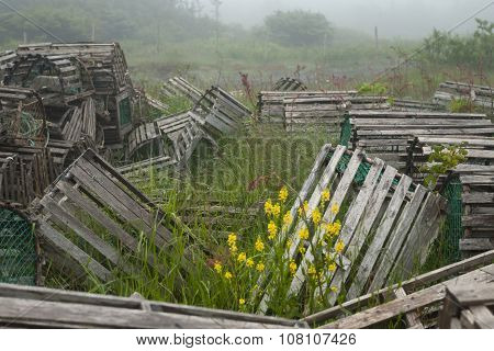 Array Of Lobster Traps In Newfoundland And Labrador
