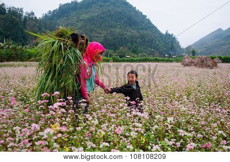 Minority ethnic kids are in buckwheat flower field in Hagiang, Vietnam.