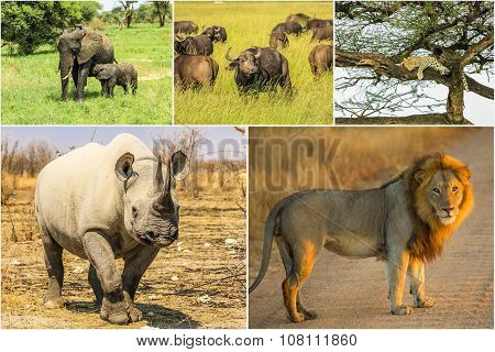 Big Five Collage