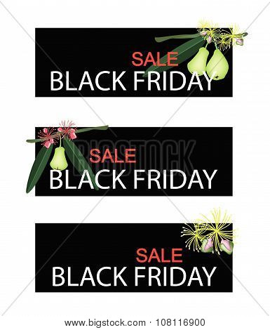 Green Water Apple On Black Friday Sale Banner