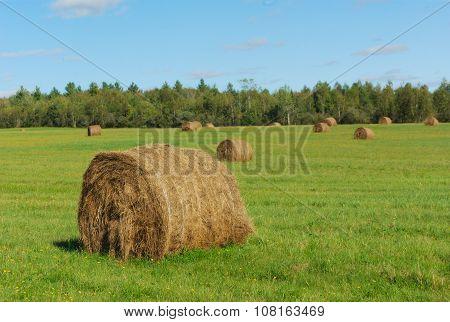 hay bales in a green field