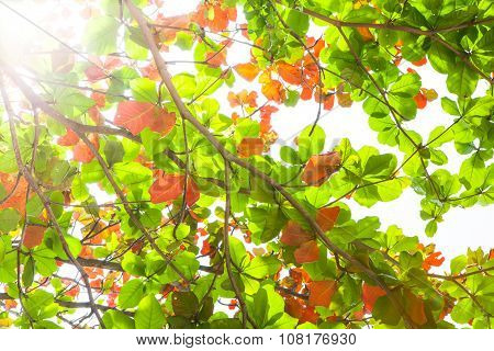 Sun beams and green leaves, nature background.