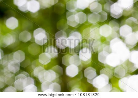 Abstract natural green blurred bokeh. Nature background.