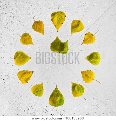 Clock stacked with colorful autumn birch leaves on the wet glass. One o'clock.