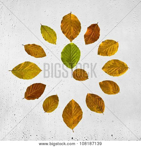 Clock stacked with colorful autumn beech leaves on the wet glass. Four o'clock.