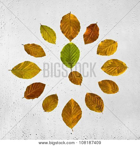 Clock stacked with colorful autumn beech leaves on the wet glass.  Five o'clock.