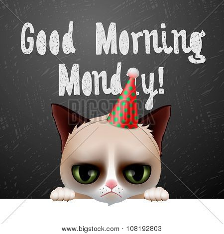 Good morning Monday, with cute grumpy cat
