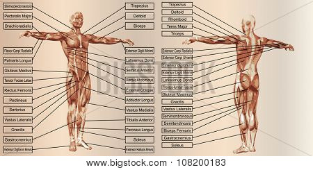 Concept or conceptual 3D human man anatomy and muscle for sport and text on beige vintage backgroundor conceptual 3D human man anatomy and muscle for sport and text on beige vintage background