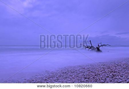 Tree In The Sea, Beach