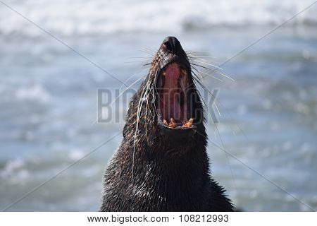 Female seal relaxing by the beach