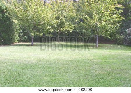 Lawn Space In Public Garden