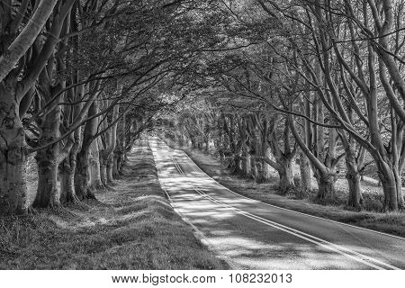 Black And White Landscape Image Of Road Leading Through Autumn Fall Forest