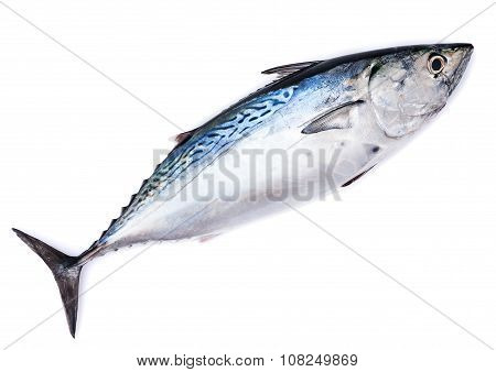 Raw fish, bonito, isolated on white with shadow poster