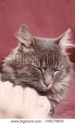 Grey lazy cat sleeping on sofa in the room, close up poster