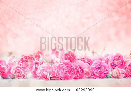 The Beautiful Blooming Pink Carnation Flowers With Sweet Bokeh  Background With Text Space