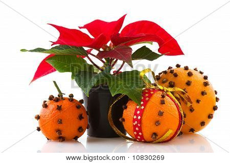 Poinsettia And Oranges With Cloves