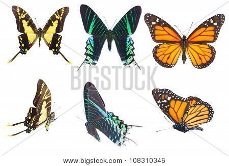 Tropical butterflies set