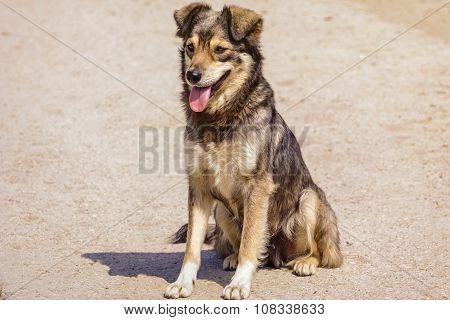The Mongrel Dog