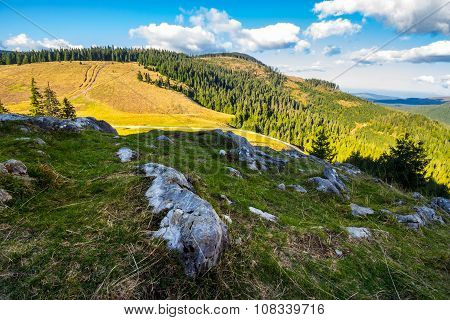 Coniferous Forest On A  Mountain Slope