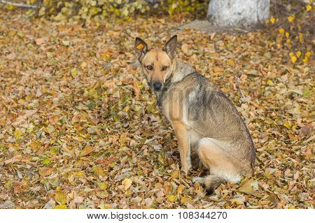 Outdoor portrait of cute stray female dog sitting in an autumnal park
