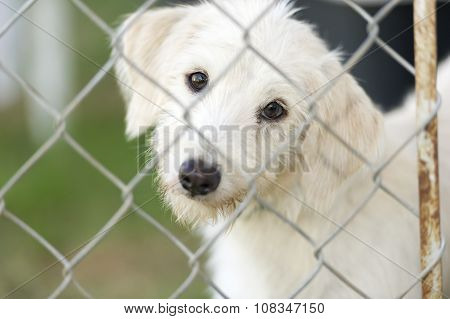 Shelter dog is cute dog in an animal shelter poking his nose through the fence wondering who is going to take him home. poster