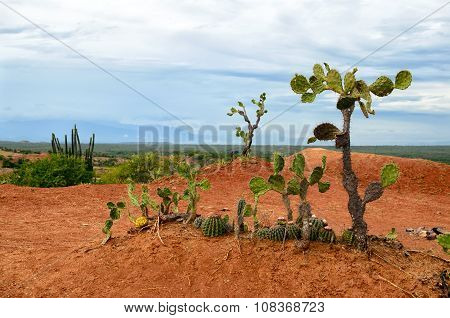 Few Different Cactus In Bright Orange Soil Of Tatacoa Desert